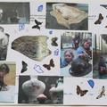 Example Discover Arts Award logbook page featuring collage of objects from the Museum of Natural History