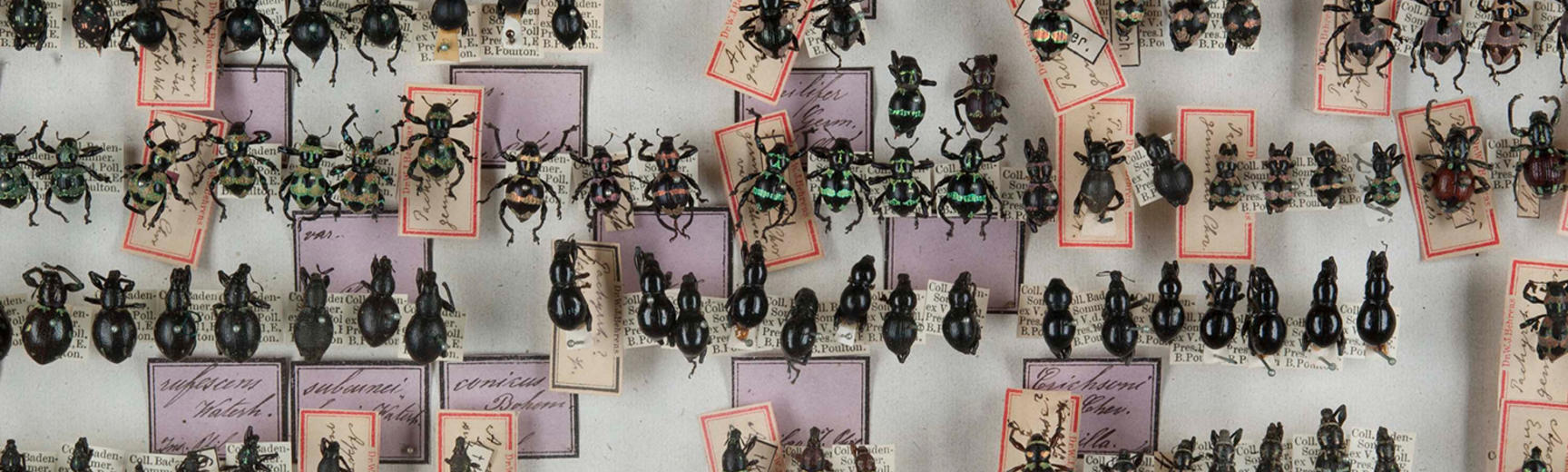 weevil specimens on display