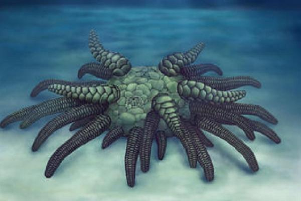Life reconstruction of Sollasina cthulhu. (c)Elissa Martin, Yale Peabody Museum of Natural History.