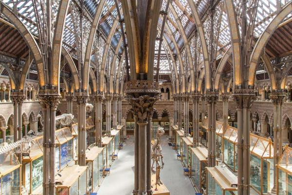 Main court, Museum of Natural History