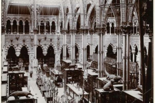 Photograph of the Oxford University's Museum of Natural History in 1890
