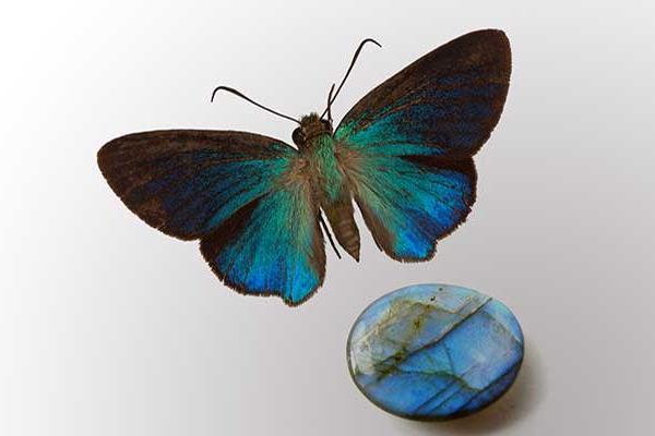 Madagascan Labradorite gem and Butterfly