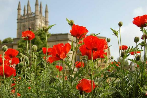 Poppy flowers in front of Magdalen College
