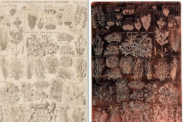 RTI capture, Morison Copper plates, Mosses, Section 15 Tab. 17. Image, Ashmolean Museum Conservation
