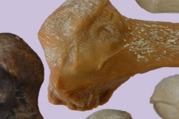 dodo head casts OUMNH