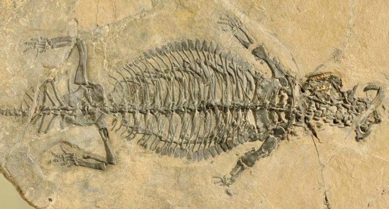 Fossil of Eusaurosphargid PIMUS A/III 4380