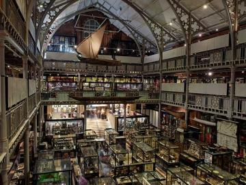 Gallery View, Pitt Rivers Museum