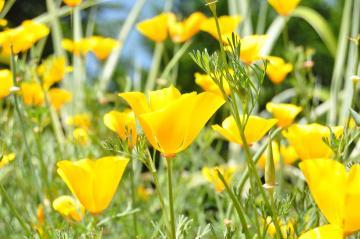 Yellow blooms at the Botanic Garden