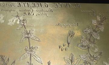 RTI capture (detail), Morison Copper plates, Section 11 Tab. 19. Image, Ashmolean Museum Conservation