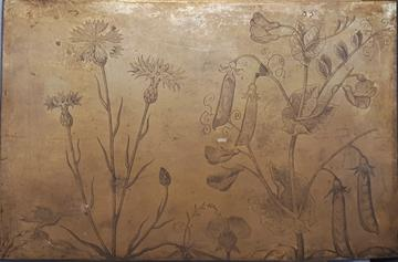 Copperplate depicting two plants